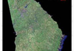 Georgia State Mosaic